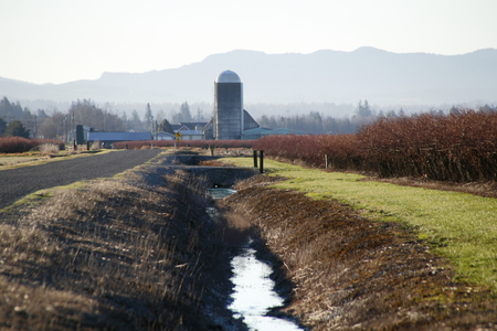 irrigate: A rural canal used to irrigate crops in south west Washington State.