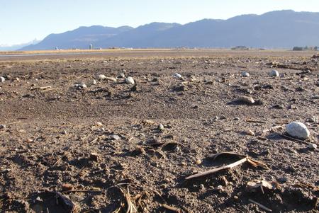 nutrientes: Rica en nutrientes, el suelo del valle de Fraser en Columbia Brit�nica meridional fue derivado de sedimentos del r�o. Foto de archivo