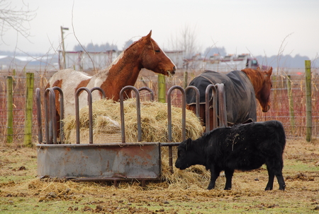 trough: A large container supplies hay for various livestock.