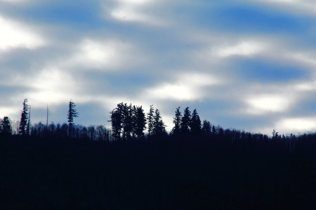 Early morning forest in the mountains.