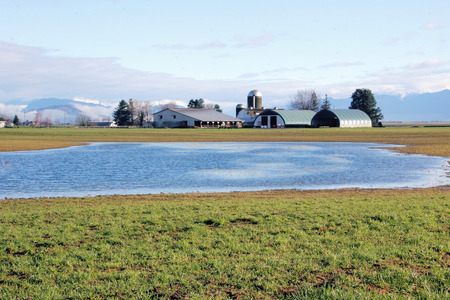 agricultural area: A large pool of water stands in a grassy field in an agricultural area.