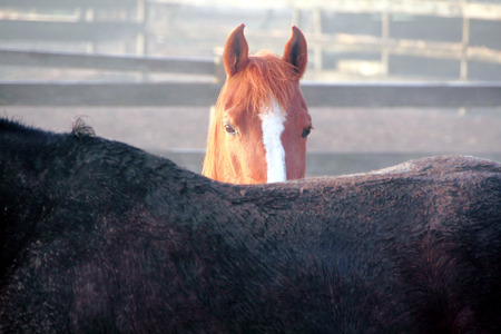 A shy horse carefully watches the photographer.