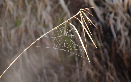 leverage: A blade of winter grass provides leverage for a small, delicate spider web.
