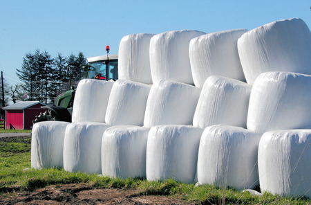 neatly stacked: Large hay bales are wrapped with plastic and neatly stacked. Stock Photo