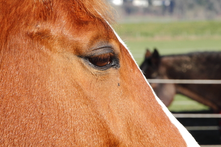 at close quarters: Extreme close up profile of a horse and her eye Stock Photo