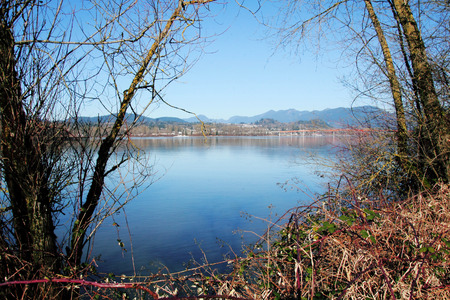 A site line through trees across the Fraser River and the city of Mission, BC. photo