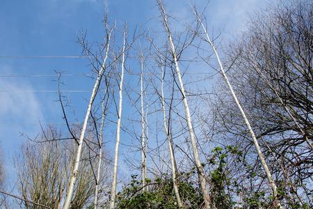 Bomen groeien gevaarlijk dicht bij een hoog vermogen elektrische leidingen.