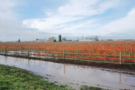 swamped: Heavy rainfall has flooded agricultural land and threatened crops.