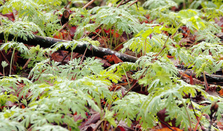 A thick carpet of roots, dead leaves, branches and plants comprise the forests  ecosystem.