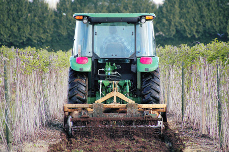 reverse: A working Washington farmer tends to his raspberry crop.
