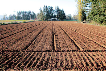 planting season: Farm land has been plowed, weeded and readied for a new planting season. Stock Photo