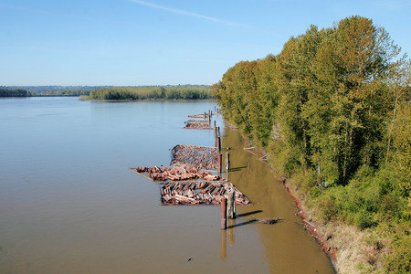 riverfront: A riverfront boom where logs are stored before processing. Stock Photo