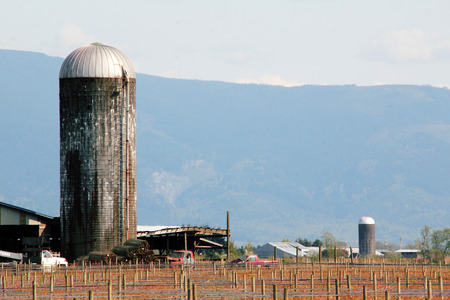 washington landscape: Stave silos stand straight and tall in a rural Washington landscape. Stock Photo