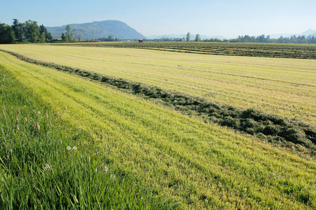 acreage: Hay has been cut, collected and harvested on a vast acreage of farmland in southern Canada.
