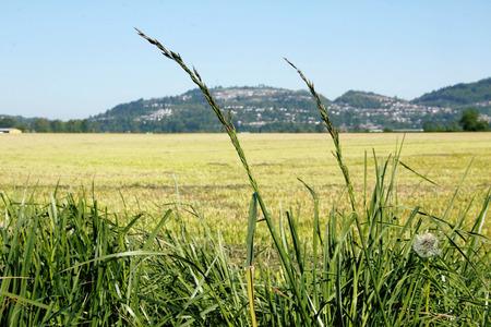 acres: Vast acres of grassland in North America