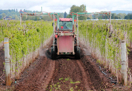 fertilize: A farmer uses specialized equipment to fertilize his raspberry field.