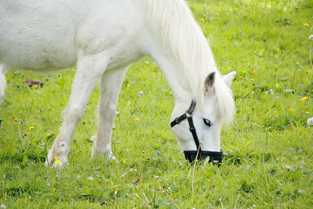 restrict: A muzzle is used to restrict the amount of grass a horse can consume.