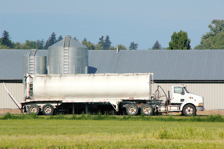 Een vrachtwagen zal bakken te vullen met graan dat zal worden gevoerd aan kippen. Stockfoto