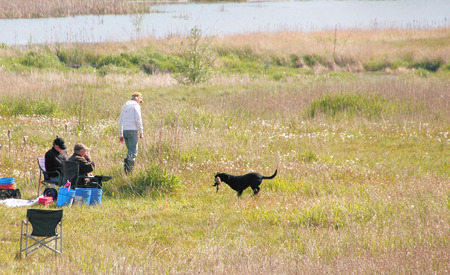 decoy: Judges watch as a Retriever returns with the decoy during the 2015 Golden Retriever Club of BC trials.