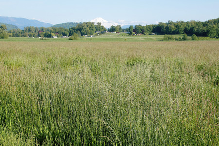 canadian pacific: Spring grassland in the Fraser Valley near Washington