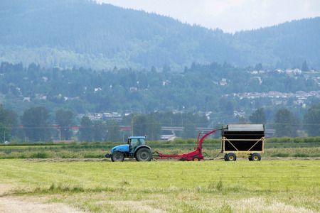 acres: A few acres are hayed using a small combiner and tractor.