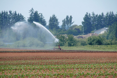 irrigated: Dry and parched farm land is irrigated throughout the day. Stock Photo