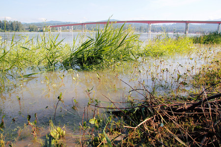 encroaching: Spring thaw and and water is breaching the banks of a river.