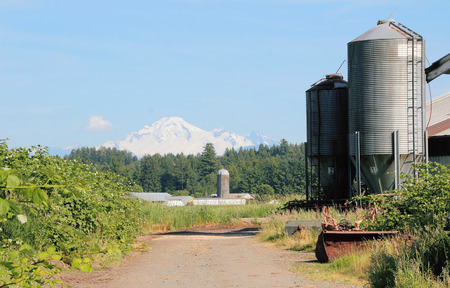 snow capped: Tall grain bins are dwarfed by snow capped Mount Baker.