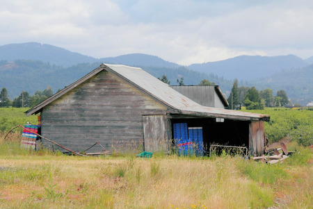 An old wood frame shack is used to store equipment for the blueberry crop. Stock Photo