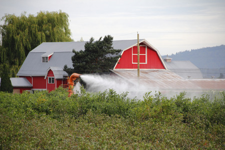 A thermal fogger is used to disinfection and protect a blueberry crop. Zdjęcie Seryjne
