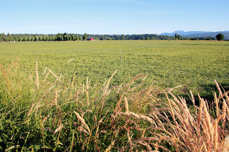 rural countryside: Rural countryside in British Columbia Canada during the late Spring season. Stock Photo