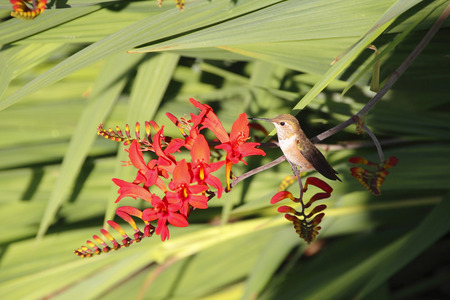 A Hummingbird rests while standing on the stem of an exotic flower.