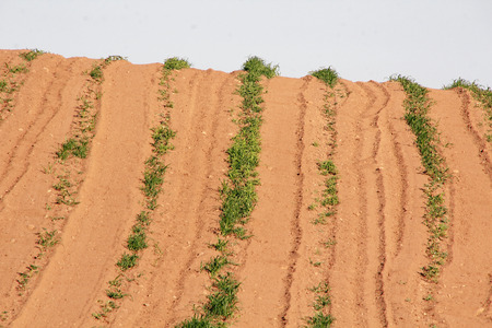 Dry, arid conditions has ruined a planted crop