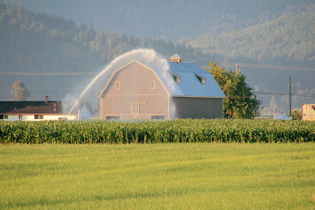 acreage: Industrial irrigation hoses are used to water a large area of corn crops. Stock Photo