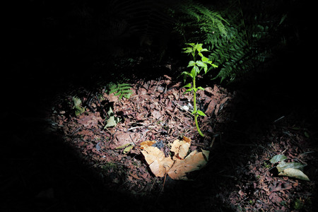 A sliver of light filters through the forest branches and highlights plant life on the forest floor. 版權商用圖片