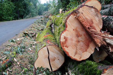 logging truck: Trees cut down lay beside a logging truck road. Stock Photo