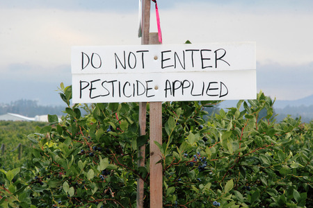 sprayed: A handwritten sign warns that the berry crop has been sprayed with pesticide