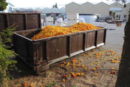 An industrial bin is filled with overstocked peppers.