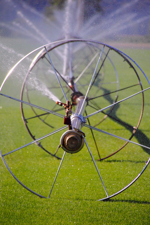 sod: Industrial Pipes and wheels are used to irrigate acres of grass or sod on a Washington farm.