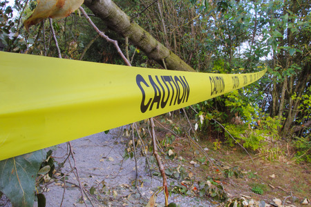 toppled: Strong winds have toppled a tree that has fallen across a walking path where caution tape has been hung to warn pedestrians.