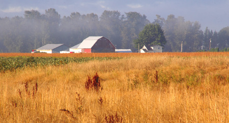 washington landscape: Fields of dry grass and berries comprise a Washington rural landscape. Stock Photo