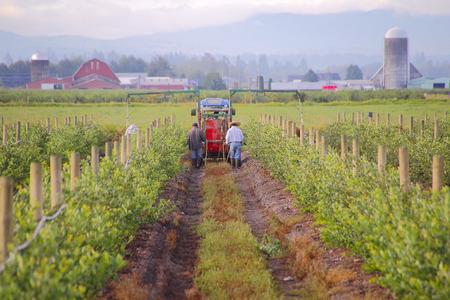 Landarbeiders gebruik van bestrijdingsmiddelen om bessen planten te beschermen tegen insecten schade aan de planten.