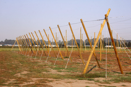 Cables and poles have been erected in preparation for planting and growing grapes.