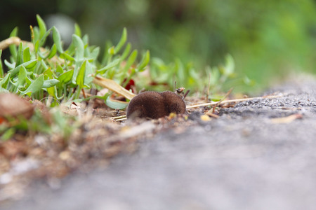 A baby Mole, separated from its mother, sits alone by a road. Фото со стока