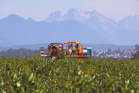 machines: Machines are used to harvest blueberries in British Columbias Fraser Valley district. Stock Photo