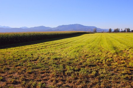 blanketed: Field blanketed in morning light include both hay and corn.