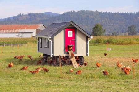 A posh coop complete with awnings and windows is home for a brood of chickens.