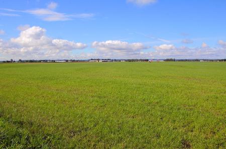 as far as the eye can see: Green grassland as far as the eye can see in a rural landscape.