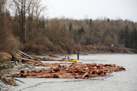 cedar shakes: Cedar logs are collected and sorted near a lumber mill. Stock Photo