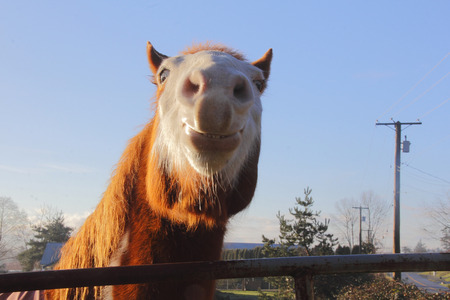 mugging: A horse almost seems to be mugging the camera. Stock Photo